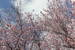 ciel et fleurs Image libre de droits