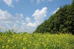 ciel et fleurs Photo stock