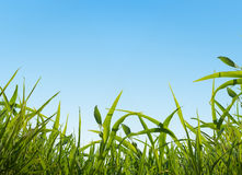 Ciel et herbe Photo stock
