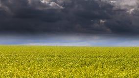 Ciel et herbe de nuage Photo stock