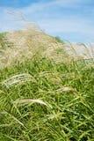 Ciel et herbe en automne Photo libre de droits