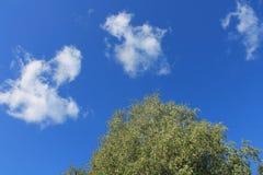 Ciel et nuages d'été Image libre de droits