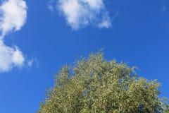Ciel et nuages d'été Photo libre de droits