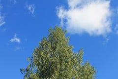 Ciel et nuages d'été Images libres de droits