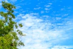 Ciel et nuages en bambou de branche Images stock