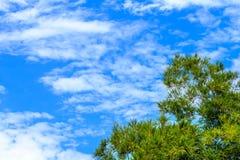 Ciel et nuages en bambou de branche Photo libre de droits