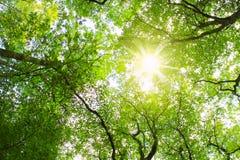 Ciel et soleil dans les arbres. Images libres de droits