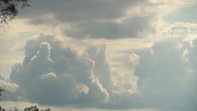 Ciel foncé avant tempête avec de grands nuages volumétriques métamorphiques rapides, avec des branches d'arbre sur parti Plein la clips vidéos