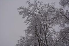 Ciel froid de glaçons d'arbres de neige d'hiver de tempête de pluie verglaçante Photographie stock libre de droits