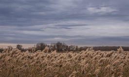 Ciel gris et roseaux jaunes au-dessus de la rivière d'automne photographie stock libre de droits