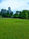 Ciel, herbe verte, petite correction de forêt image libre de droits