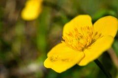 ciel jaune Photos libres de droits