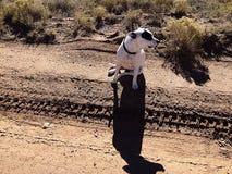 ciel l'observation de chien Photo stock