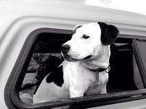 ciel le chien Photo libre de droits