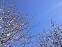 Ciel lumineux dans un jour de l'hiver, Tokyo, Japon Photographie stock libre de droits