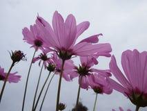 Ciel lumineux et belle fleur photographie stock