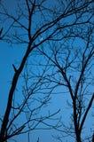 Ciel, lune, arbres Images libres de droits