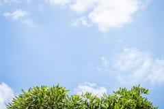 Ciel mou en Thaïlande Photo stock