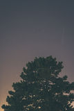 Ciel nocturne au-dessus d'arbre Photos libres de droits