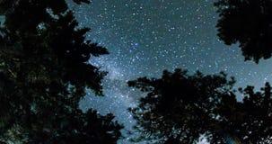 Ciel nocturne au-dessus de Forest Treetops banque de vidéos