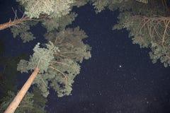 Ciel nocturne avec des étoiles et des arbres s'étendant au ciel Photo libre de droits