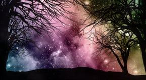 Ciel nocturne de Starfield avec des silhouettes d'arbre Image stock