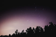 Ciel nocturne et la forêt Photos libres de droits