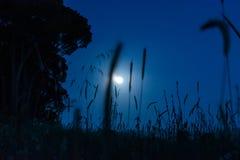 Ciel nocturne sous la lumi?re de lune image stock