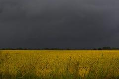 Ciel noir au-dessus de champ de blé Image stock