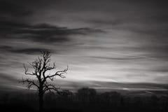 Ciel noir et blanc Image stock
