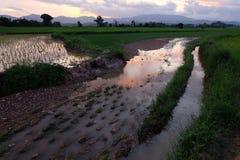 Ciel-nuages d'Asiatique de gisement de riz Photographie stock