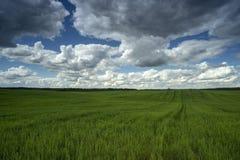 Ciel nuageux au-dessus du champ, paysage d'été Image libre de droits