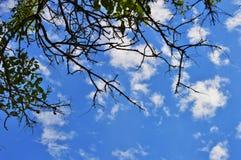 Ciel nuageux d'été Images stock