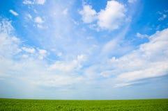 Ciel nuageux et herbe image stock