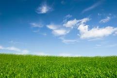 Ciel nuageux et herbe images stock