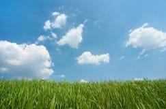 Ciel nuageux et herbe verte photographie stock