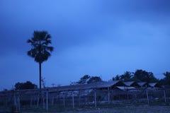 Ciel nuageux orageux bleu-foncé sous un arbre et ferme au temps de coucher du soleil Photographie stock