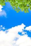 Ciel nuageux vert et bleu de printemps frais Photographie stock libre de droits