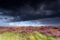 Ciel orageux au-dessus des prés avec la bruyère Image libre de droits