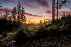 Ciel orange dans la forêt Photographie stock libre de droits