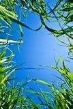 Ciel par l'herbe Photographie stock