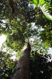 Ciel par les branches Images stock