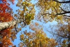 Ciel par les feuilles d'automne Image stock