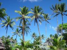 Ciel polynésien photos libres de droits