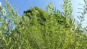 Ciel vert de buissons d'arbres d'inclinaison clips vidéos