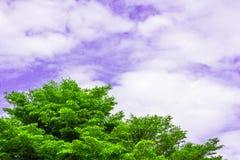 Ciel vert et bleu d'arbre Photographie stock