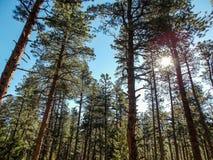 Cieli blu attraverso gli alberi fotografia stock