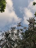 Cieli blu e bei fiori fotografia stock libera da diritti