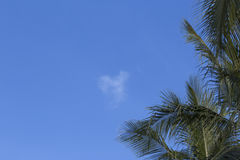 cieli blu e foglie di palma Fotografie Stock