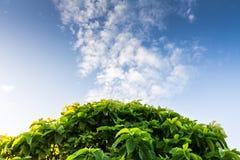 Cieli blu e l'albero Fotografia Stock